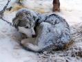 Frosty dog